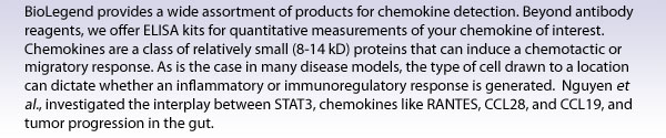 BioLegend provides a wide assortment of products for chemokine detection. Beyond antibody reagents, we offer ELISA kits for quantitative measurements of your chemokine of interest. Chemokines are a class of relatively small (8-14 kD) proteins that can induce a chemotactic or migratory response. As is the case in many disease models, the type of cell drawn to a location can dictate whether an inflammatory or immunoregulatory response is generated.  Nguyen et al., investigated the interplay between STAT3, chemokines like RANTES, CCL28, and CCL19, and tumor progression in the gut.